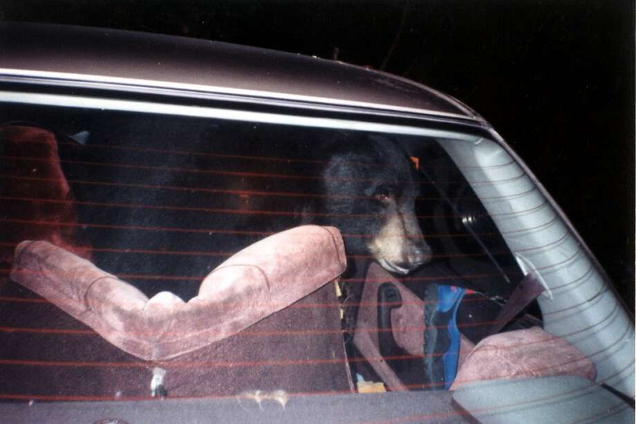 The car parked in a hallway or classroom, requiring students to dismantle and rebuild it inside in something like 12 hours, gets ingenuity points. (Hopefully there was no bear hidden in the car, like this guy in Yosemite) Photo: Courtesy Yosemite National Park