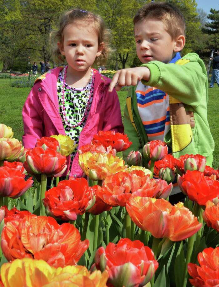 Ryan Rouse, 4, of Gansevoort points out his favorite colors to his sister Sophia Rouse, 2, as they take in a preview of this weekend's Tulip Festival at Washington Park Thursday May 8, 2014, in Albany, NY.  (John Carl D'Annibale / Times Union) Photo: John Carl D'Annibale
