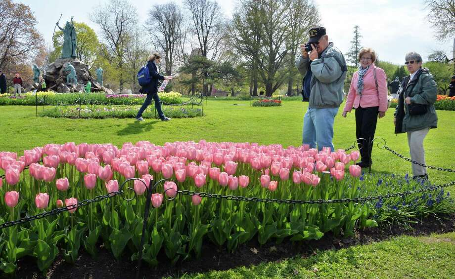 Flower lovers tour the tulip beds in preview of this weekend's Tulip Festival at Washington Park Thursday May 8, 2014, in Albany, NY.  (John Carl D'Annibale / Times Union) Photo: John Carl D'Annibale