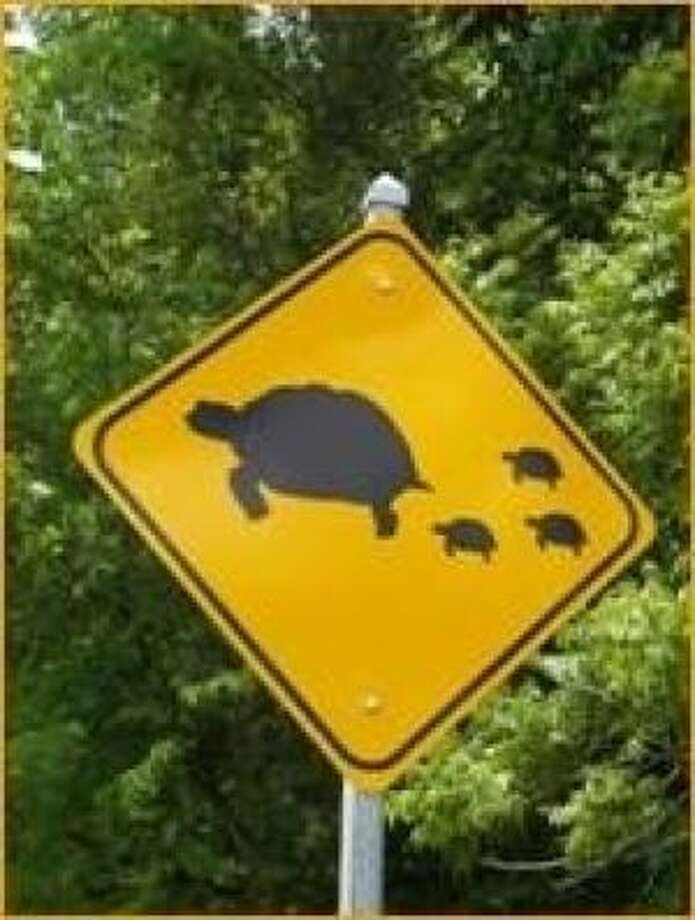 Residents campaigned for the turtle crossing signs after they saw too many getting hurt crossing the road.Check out more bizarre animal-crossing signs from all over. Photo: City Of Missouri