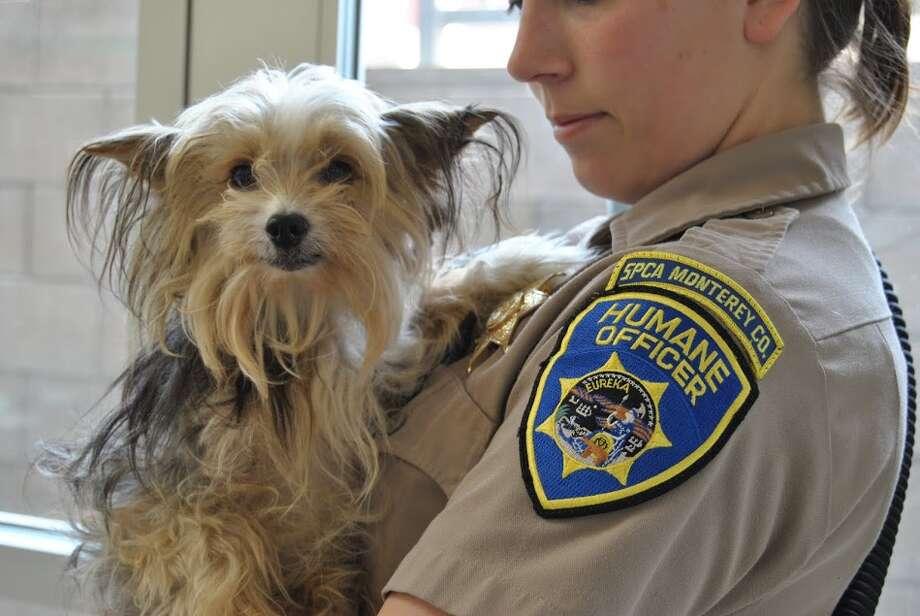 Photo courtesy Monterey County SPCA