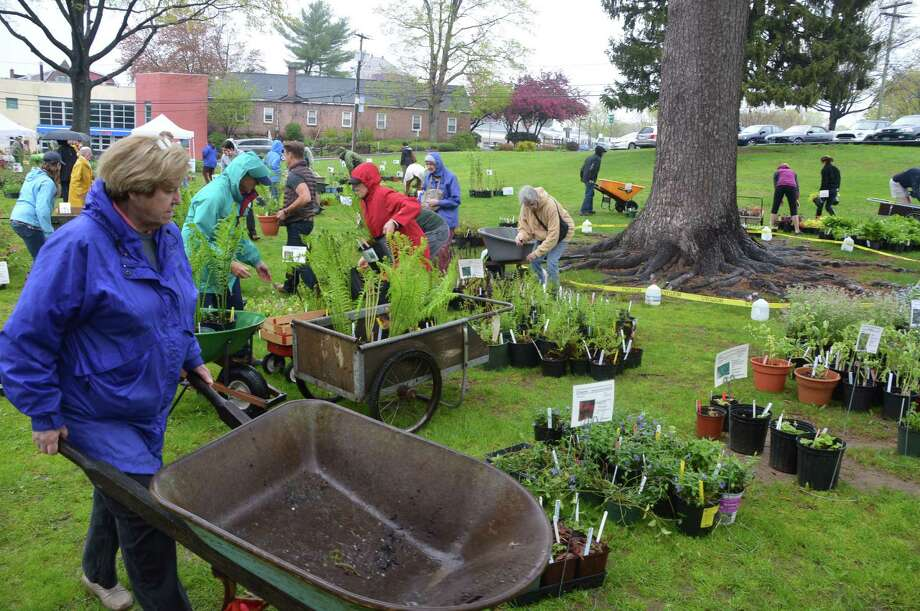 Jesup Green was buzzing with activity, despite wet weather, Friday morning as the Westport Garden Club staged its annual plant sale. Photo: Jarret Liotta / Westport News