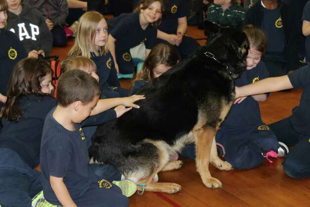 Three officers and two K-9s from the Troy Police Department visited St. Augustine's School to put on a training demonstration on Monday, May 5.  Here, students get up close and personal with K-9 Erin.