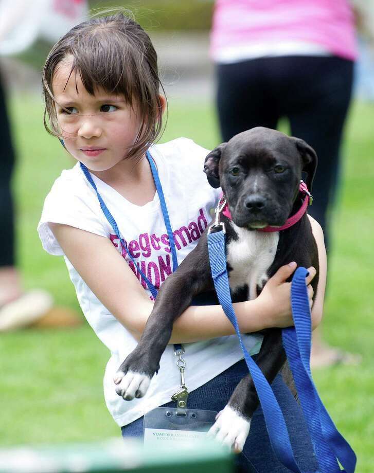 OPIN volunteer Zoe Perimenis holds Pasey, an 11-week-old pit bull, at the Stamford Dog Park on Saturday, May 10, 2014, the 5-year anniversary of the park. Photo: Lindsay Perry / Stamford Advocate