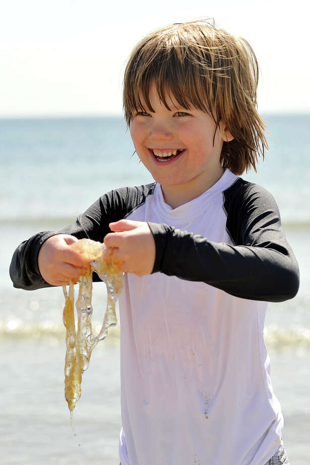 Miller Fishback displays a dead jellyfish he found floating in the water at Greenwich Point Park beach in Greenwich, Conn., on Sunday, May 11, 2014. Photo: Jason Rearick / Stamford Advocate
