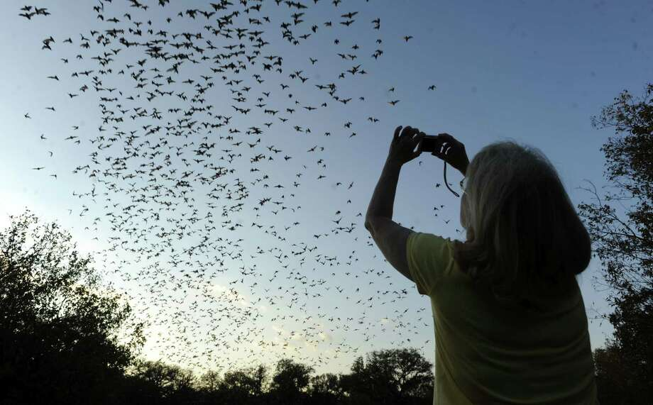 Conservationists worry that subdivision lighting and human activity would interfere with the bats and their fragile habitat. Photo: Billy Calzada / San Antonio Express-News / gcalzada@express-news.net
