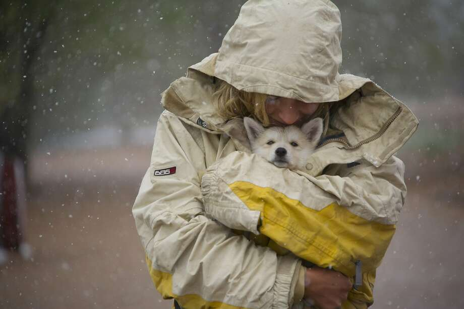 "Cassandra Cantu shields her seven-week-old puppy ""Kamala"" from the snow as she walks with friends in the Bear Creek Dog Park in Colorado Springs, Colo. Sunday, May 11, 2014. Snow is expected to continue in the Pikes region overnight Sunday. (AP Photo/The Gazette, Mark Reis) Photo: Mark Reis, Associated Press"