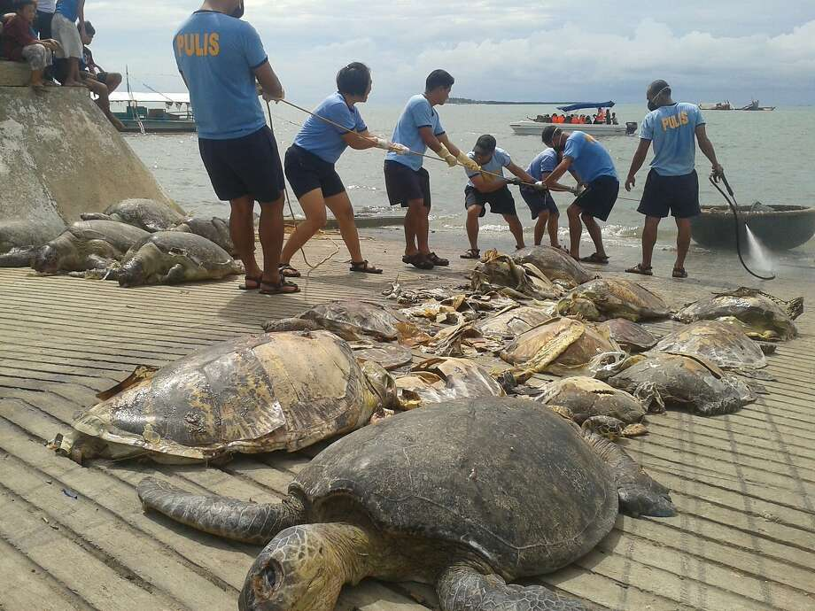 Philippine maritime police in Puerto Princesa City, Palawan island, unload sea turtles from a Chinese-flagged vessel seized by officials last week in disputed South China Sea waters. Photo: Str, AFP/Getty Images