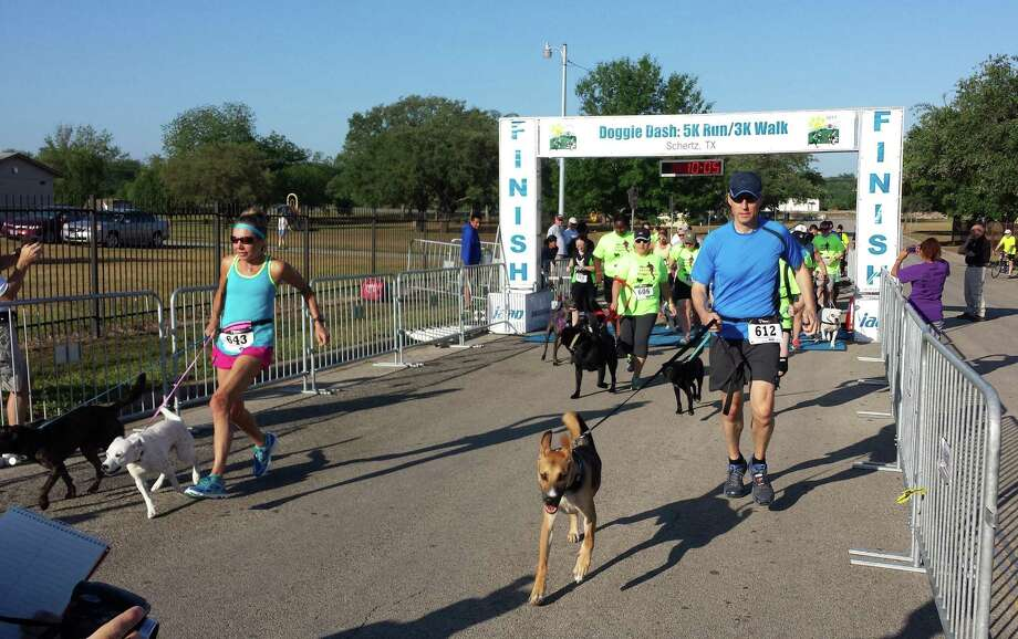 Tony Garton of Garden Ridge and his three-legged dog, Cooper, start the 5K. Photo: Jeff B. Flinn / Northeast Herald