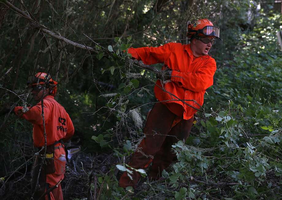 YOUNTVILLE, CA - MAY 12:  A California Departent of Corrections inmate fire crew from Delta Conservation Camp pulls on a branch while working with Cal Fire to remove ground fuels and small trees along a road to help reduce the spread of fire in the event of a wildfire on May 12, 2014 in Yountville, California.  As drought conditions continue throughout California, Cal Fire announced the start of fire season in counties north of the San Francisco Bay Area, a week after the San Francisco Bay Area and Sacramento. Fire officials are performing home inspections and asking homeowners to leave at least 100 feet of defensible space around their houses. Since the beginning of the year, Cal Fire has responded to nearly 1,300 wildfires, twice as many as a typical year during the same period.  (Photo by Justin Sullivan/Getty Images) Photo: Justin Sullivan, Getty Images