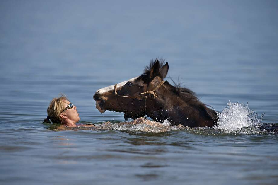 Tracy Blum of Roseville swims with her quarter horse, Gambler as they cool off in Folsom Lake on Monday, May 12, 2014, in Folsom, Calif. Temperature in the Sacramento region is expected to hit triple digits this week. (Jose Luis Villegas/Sacramento Bee/MCT) Photo: Jose Luis Villegas, McClatchy-Tribune News Service