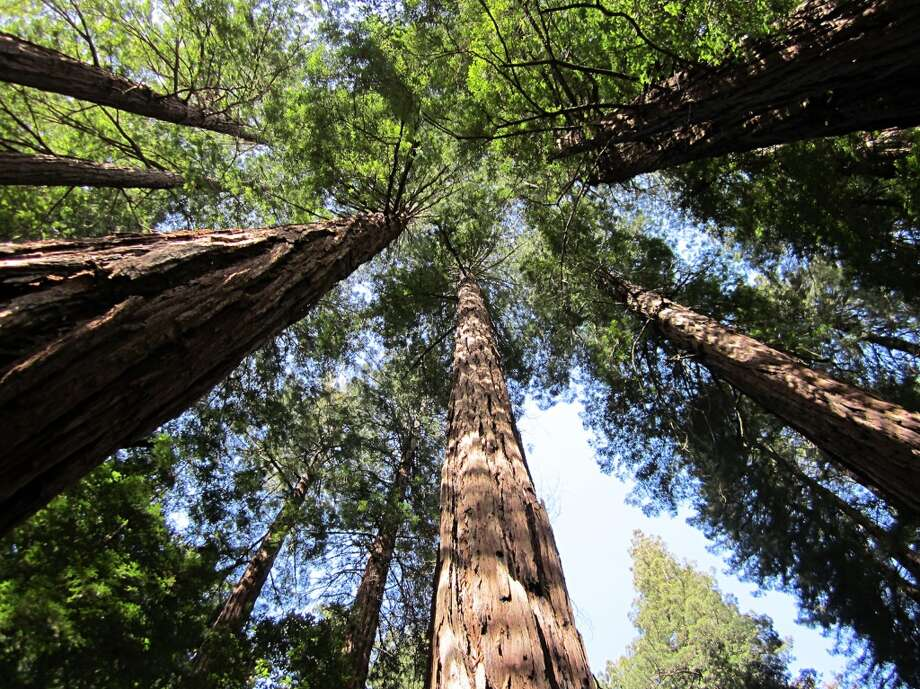 Muir Woods belongs on everyone's bucket list, according to many of our readers. See what else ... Photo: Sebastien Bachar