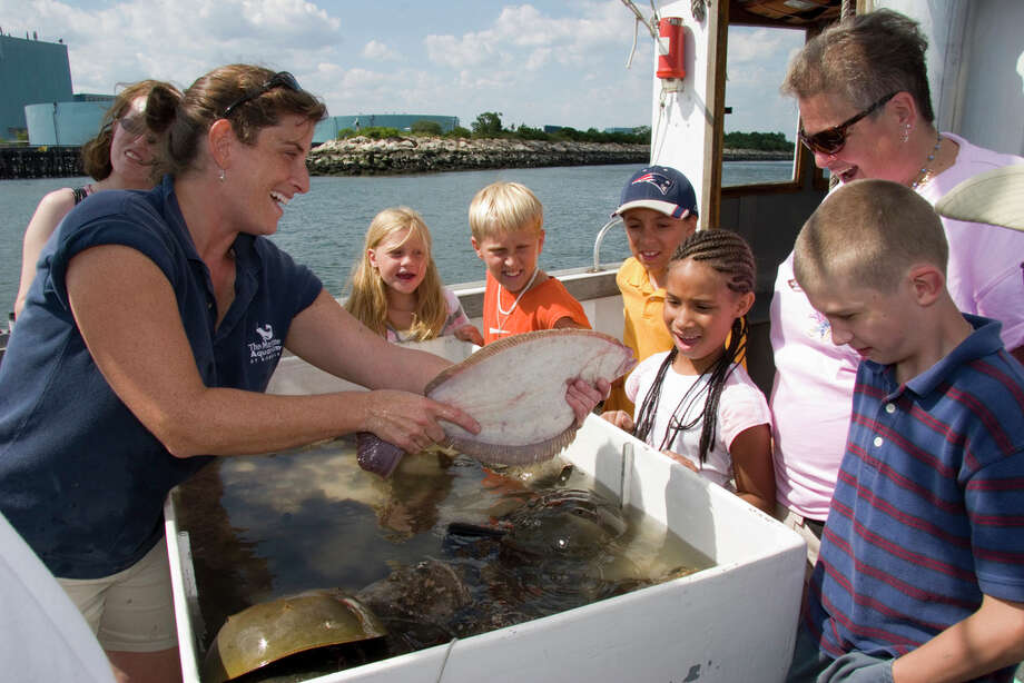 The Maritime Aquarium at Norwalk's Marine Life Study Cruises depart on Saturdays at 1 p.m. through June 28. They'll push off daily at 1 p.m. in July and August. Photo: Contributed Photo, ST / Connecticut Post