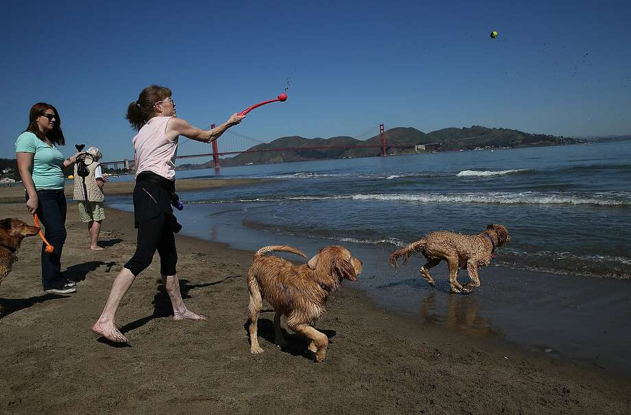 Beachgoers play fetch with dogs at Crissy Field on May 13, 2014 in San Francisco, California. The Bay Area is expecting clear mid-day skies and seasonal temperatures this weekend. Photo: Justin Sullivan, Getty Images