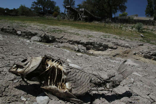 A dead, dried out fish lies in what was once a flowing Medina River north of Medina Lake Wednesday August 17, 2011. Medina Lake is down more than 30 feet and the Medina River, which flows into Medina Lake, is completely dry in some areas. Water levels on lakefront and riverfront properties are being affected by the state's scorching drought. Photo: JOHN DAVENPORT, John Davenport / SAN ANTONIO EXPRESS-NEWS (Photo can be sold to the public)