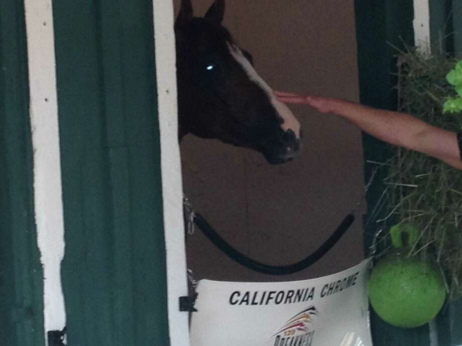 California Chrome is shown in his stall Wednesday as he prepares for Saturday's Preakness. (Tim Wilkin / Times Union)