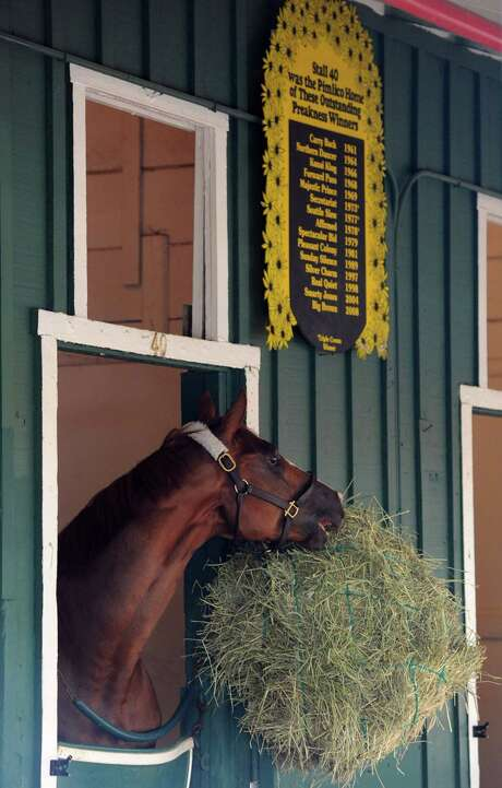Prohibitive favorite California Chrome enjoys a snack after a morning workout at Pimlico. Photo: Kim Hairston, MBR / Baltimore Sun