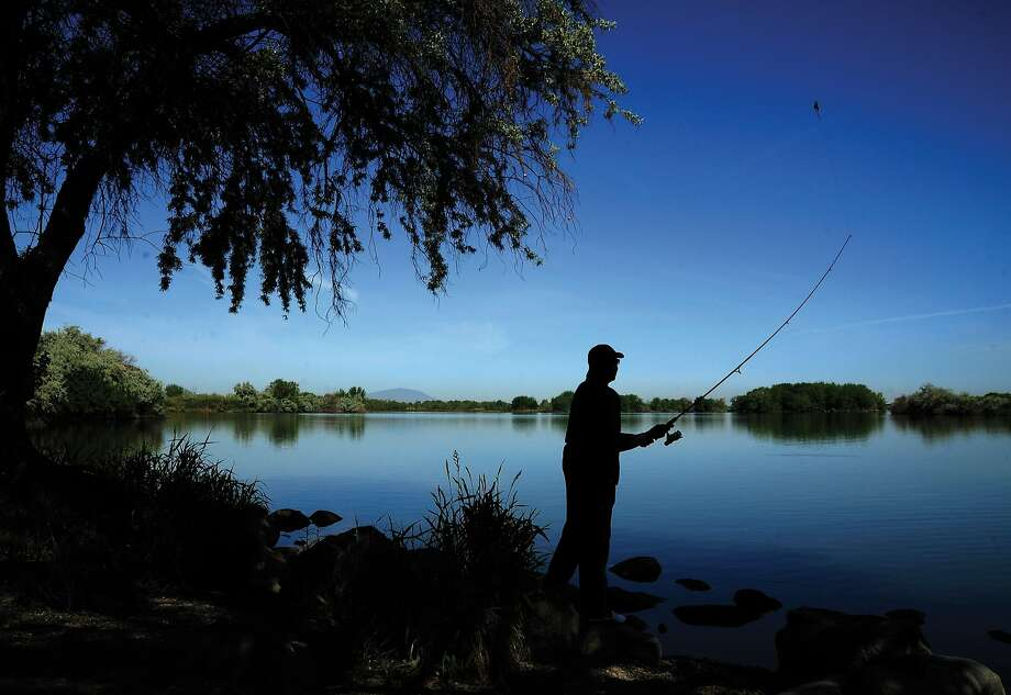 Curtis Milam tries his luck bass fishing in the morning at Wye Park on Bateman Island in Richland, Wash., on Wednesday, May 14, 2014. (Matt Gade/Tri-City Herald/MCT) Photo: Matt Gade, McClatchy-Tribune News Service