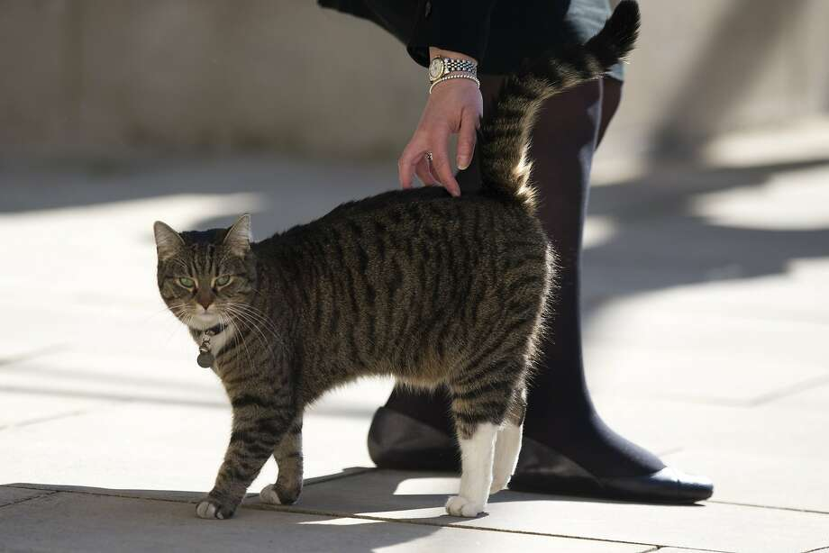 "As long as she gets petted: Freya, the tabby belonging to Britain's Chancellor of the Exchequer George Osborne, is not particular as to which foreign minister pets her at a ""Friends of Syria Meeting"" at the Foreign Office in London. Photo: Matt Dunham, Associated Press"