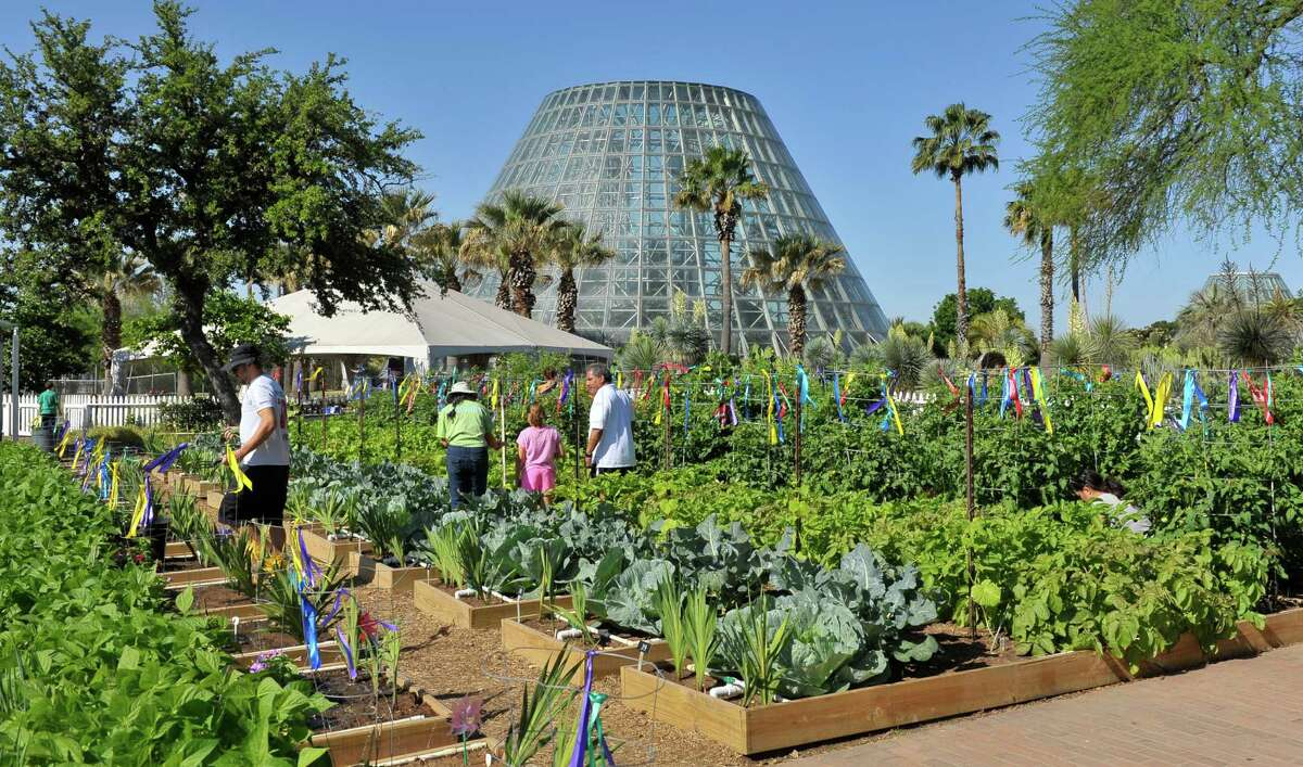 FILE PHOTO - Kids and parents work in the Childrens Vegetable Garden at the San Antonio Botanical Gardens.