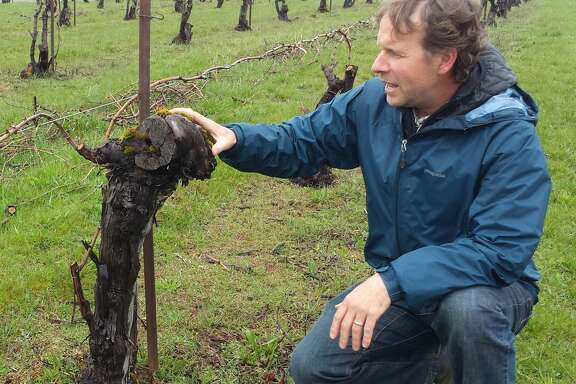 Steven Thompson of Analemma Wines kneels in the Atavus vineyard in White Salmon, Wash., one of the oldest vineyards in Washington.