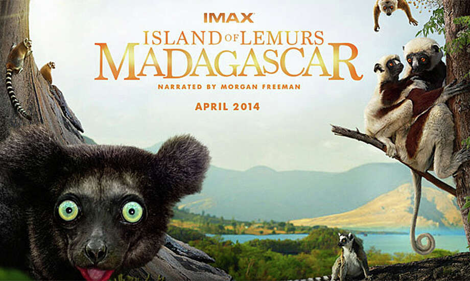 "The nature documentary, ""Island of Lemurs: Madagascar,"" is playing at the IMAX Theater at the Maritime Aquarium at Norwalk. Photo: Contributed Photo / Westport News"