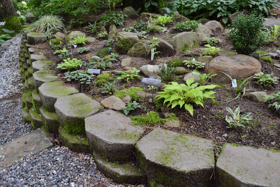 The hostas the Daltons make have a consistent aesthetic: they like rippled, narrow leaves with white backs. Photo: Emily Jahn / Emily Jahn/518Life magazine