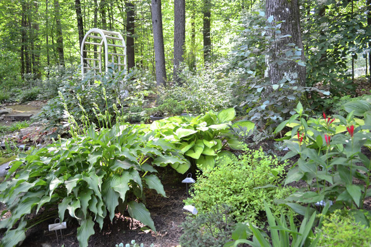 The Daltons are passionate about hostas and even hybridize their own. They have nearly 2,000 different hostas throughout their garden and have registered 12.