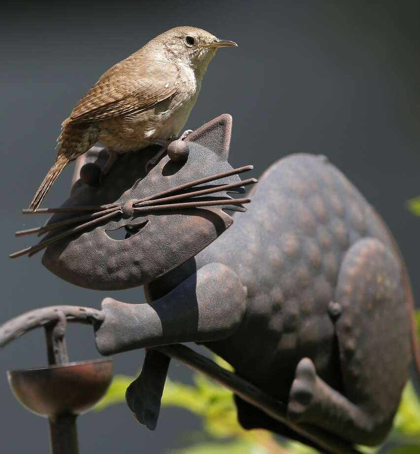 A house wren lands on a copper cat in Lawrence, Kan. Photo: Orlin Wagner, Associated Press