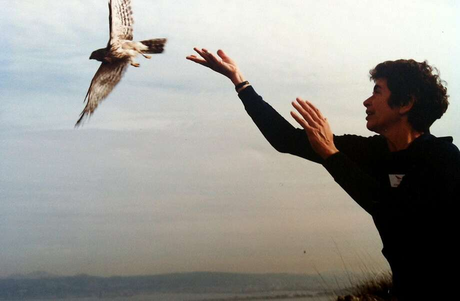 Jennie Rhine, a retired Alameda County Superior Court judge, enjoyed banding hawks for research. Photo: Courtesy Family