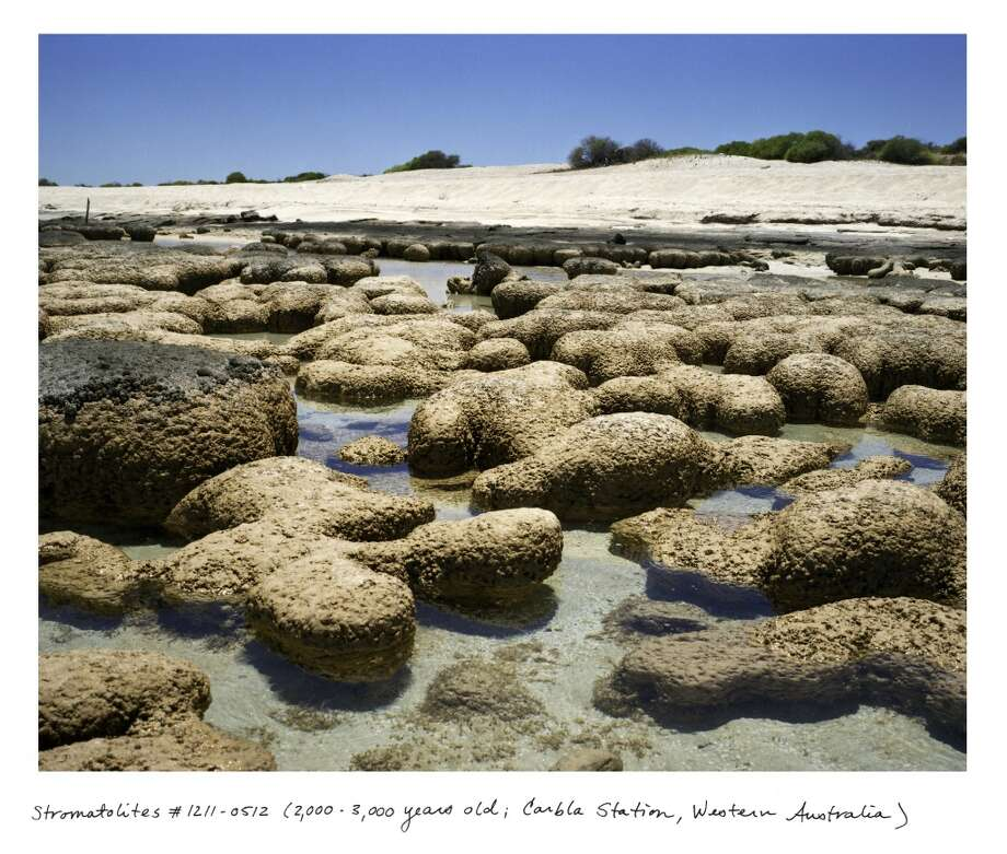 "Stromatolites #1211-0512 (2,000 - 3,000 years old; Carbla Station, Western Australia) Straddling the biologic and the geologic, stromatolites are organisms that are tied to the oxygenation of the planet 3.5 billion years ago, and the beginnings of all life on Earth. ©Rachel Sussman, from ""The Oldest Living Things in the World"""