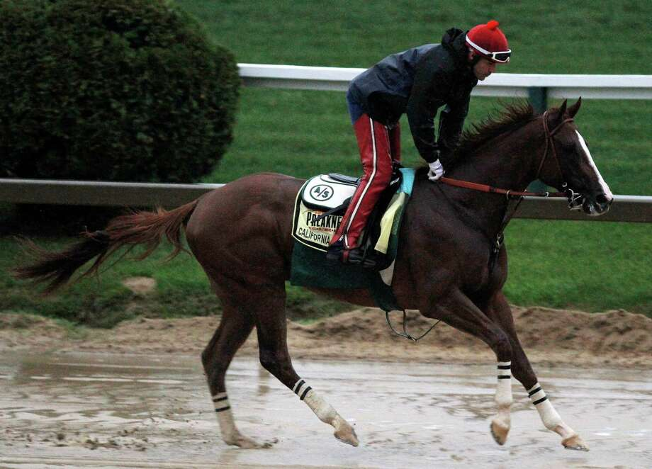 Preakness Stakes favorite California Chrome gallops in the rain under exercise rider Willie Delgado at Pimlico on Friday. Victor Espinoza will take the reins when the horse takes off from the third post position. Photo: Garry Jones, FRE / FR50389 AP