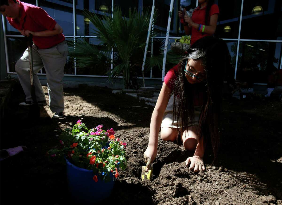 """MariCruz Garcia plants impatiens during the Hawthorne Academy's Ecology Club on Friday May 16, 2014. The Ecology Club recently won the Green Schools Challenge, a program through the U.S. Green Building Council. Hawthorne Academy, a prekindergarten through eighth grade academy in the San Antonio Independent School District, is ranked as the 38th best middle school in city, out of 132 and received a B- letter grade. It was given a """"gold ribbon"""" designation. Gold ribbon schools have a high percentage of low income students but are still considered high performing. The in-district charter school has a strong curriculum focus and an award-winning visual arts program."""