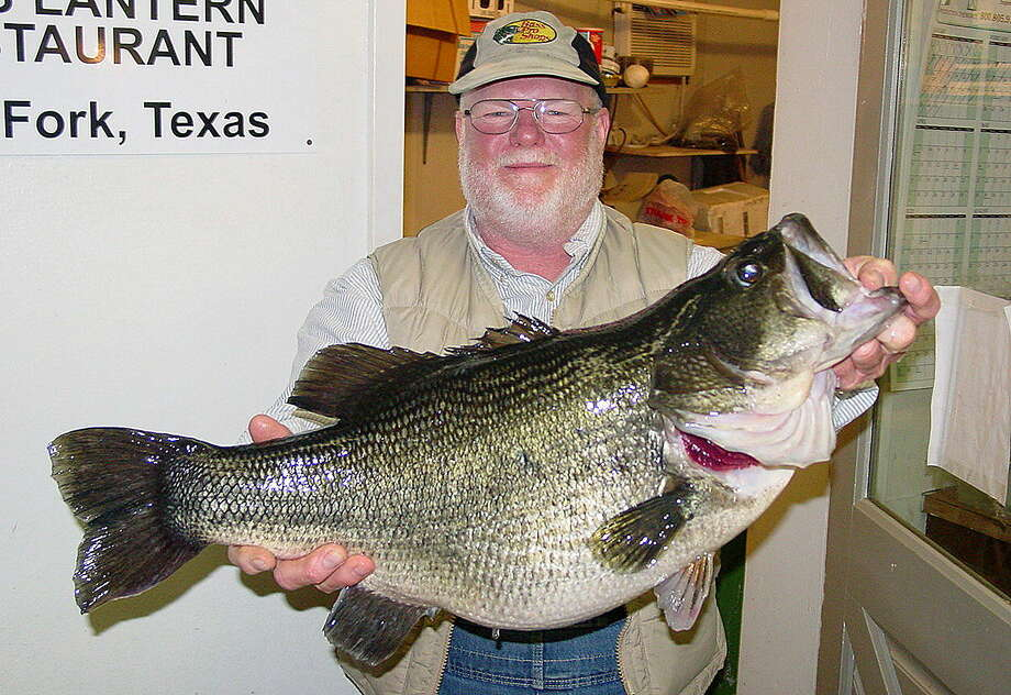 Lake Fork's production of huge largemouth bass, such as this 15.5-pounder, is unequaled in Texas and, arguably, the nation. A 15-bass stringer weighing 110 pounds was landed during a three-day tournament on Fork last weekend, setting a world record for professional bass tournaments. Eight other anglers had stringers topping the previous record of 83 pounds, 5 ounces. Photo: Picasa / handout email