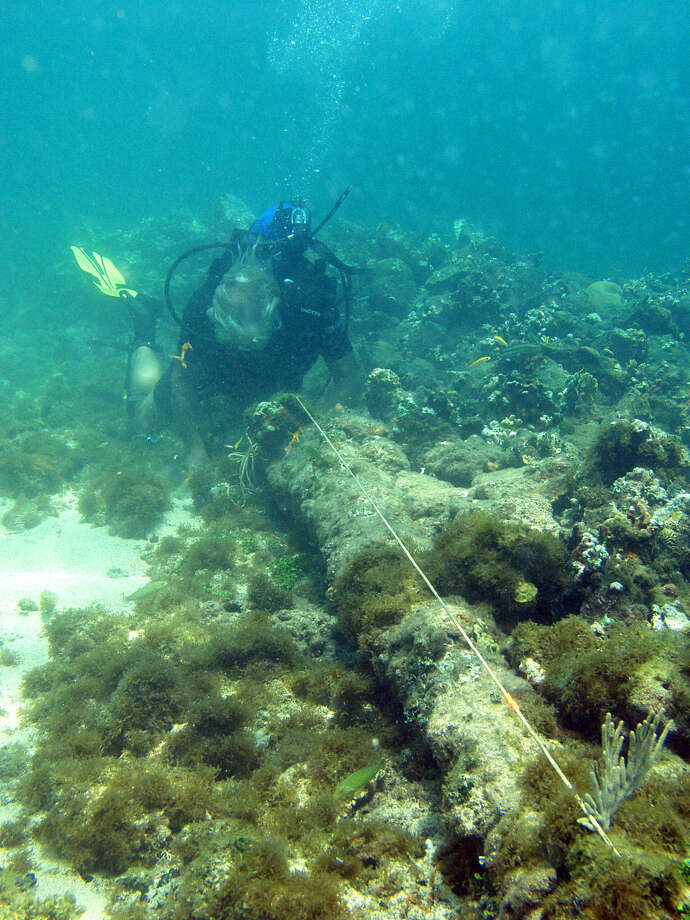 In this May 2003 photo, a diver measures a lombard cannon adjacent to a ballast pile, off the North coast of Haiti, at a site explorer Barry Clifford says could be the wreckage of Cristpher Colombus' flagship vessel the Santa Maria. Clifford said evidence that the wreck is the Santa Maria, which struck a reef and foundered on Christmas Day in 1492, includes ballast stones that appear to have come from Spain or Portugal and what looks like a 15th century cannon that was at the site during an initial inspection but has since disappeared. Photo: Brandon Clifford, AP  / BRANDON CLIFFORD2003