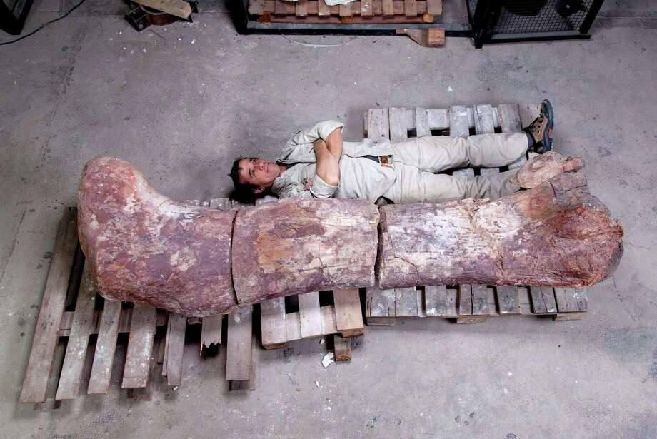 In this 2013 photo released by the Museo Paletontol-gico Egidio Feruglio on Saturday, May 17, 2014, the head of the museum's technical laboratory, Pablo Puerta, lies alongside a sauropod dinosaur femur, believed to be the largest in the world, in Trelew, Argentina. Paleontologists from the Museo Paletontol-gico Egidio Feruglio announced Friday, May 16, 2014, the discovery of the fossil remains of the sauropod dinosaur near Trelew. Photo: Jose Maria Farfaglia, AP  / AP2014