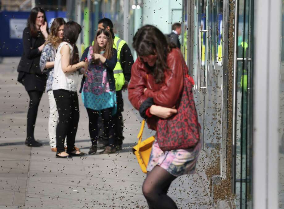 A woman huddles up as she walks past a swarm of about 5,000 honeybees that have been attracted to a discount sign on the window of a shop in central London, Friday, May 16, 2014, turning the fashion store display into a carpet of insects. It is understood the unusual nesting place was picked by the Queen bee, who landed there first and was quickly followed by her devoted colony. (AP Photo/PA, Philip Toscano)  Photo: Philip Toscano, AP  / PA