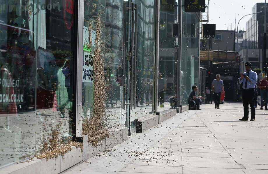 Passers by check out a swarm of about 5,000 honeybees that have been attracted to a discount sign on the window of a shop in central London, Friday, May 16, 2014, turning the fashion store display into a carpet of insects. It is understood the unusual nesting place was picked by the Queen bee, who landed there first and was quickly followed by her devoted colony. (AP Photo/PA, Philip Toscano)  Photo: Philip Toscano, AP  / PA