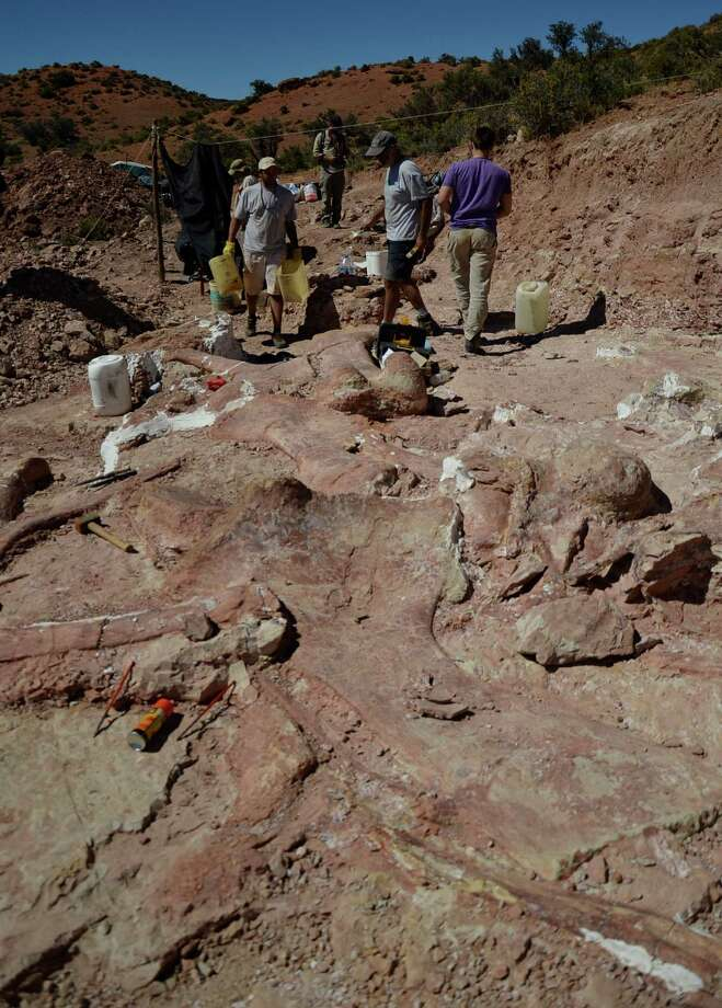 This 2014 photo released on Saturday, May 17, 2014 by the Museo Paletontol-gico Egidio Feruglio, shows a team of paleontologists working at the site where the bones of a sauropod dinosaur were unearthed, near Trelew, Argentina. Paleontologists from the Museo Paletontol-gico Egidio Feruglio announced Friday, May 16, 2014, the discovery of what they believe are the fossil remains of the world's largest dinosaur, near Trelew. Photo: Uncredited, AP  / AP2013