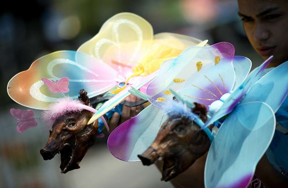 """Toasted Tinkerbells:In Manila's La Loma district, a worker prepares roasted pigs dressed as fairies for   a parade. The cooked pigs, known as lechon, are hugely popular in the Philippines and La Loma is considered the   best place to buy them. The district often showcases their famous product in """"humorous"""" fashion. Photo: Noel Celis, AFP/Getty Images"""