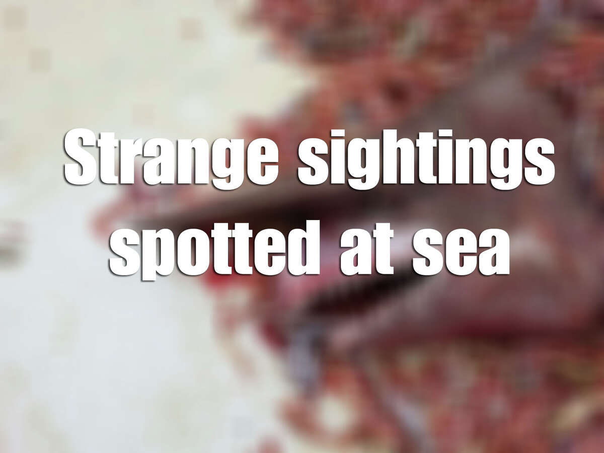 See some of the stranger stories that recently took place offshore.