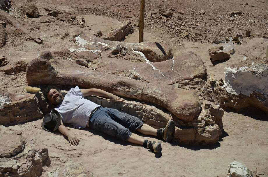 In Chubut, Argentina, about 800 miles south of Buenos Aires, a technician lies next to the thighbone of a dinosaur so big it could need a new museum to hold the complete fossil. Photo: Museo Egidio Feruglio, AFP/Getty Images
