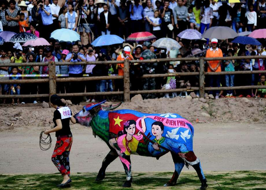 How now multicolor cow? Human body painting has yet to catch on in China, which prefers body-painting bovine subjects. Artists from eight countries painted buffaloes to compete for a $16,000 prize during 