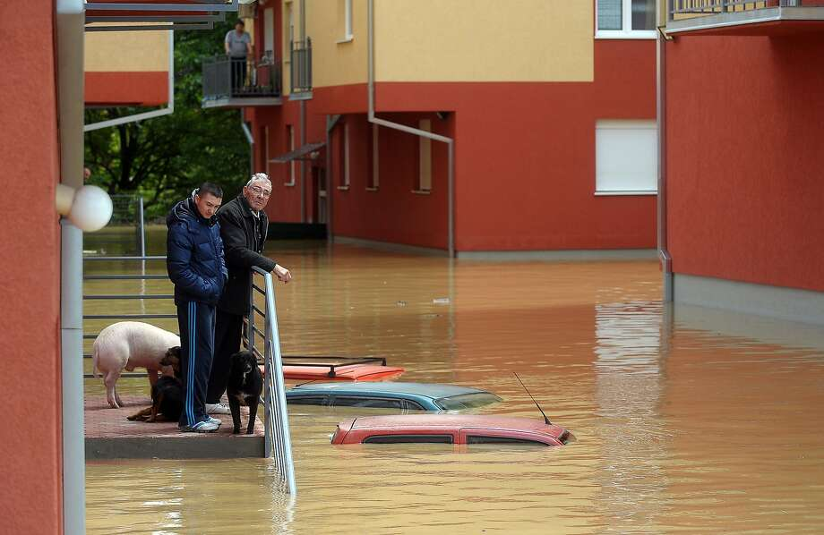 Save our bacon:Serbians wait to be evacuated from their flooded home in Obrenovac, about 25 miles 