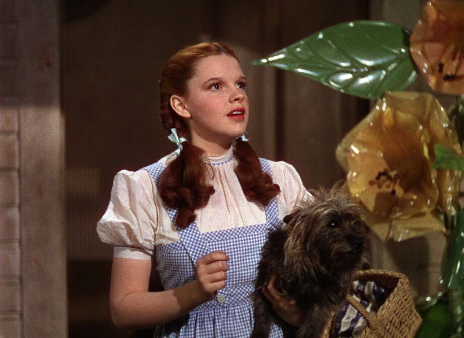 "Judy Garland as Dorothy Gale in ""The Wizard of Oz.""  But also for A STAR IS BORN. Photo: ©  2009 Turner Entertainment Co."