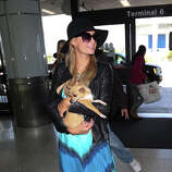 Paris Hilton and dog at LAX  on May 8, 2014 in Los Angeles, California.