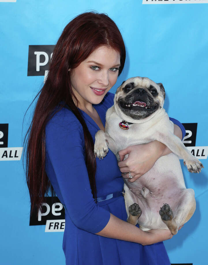 Actress Renee Olstead and Sgt. Pepper. Photo: David Livingston, Getty Images / 2014 David Livingston