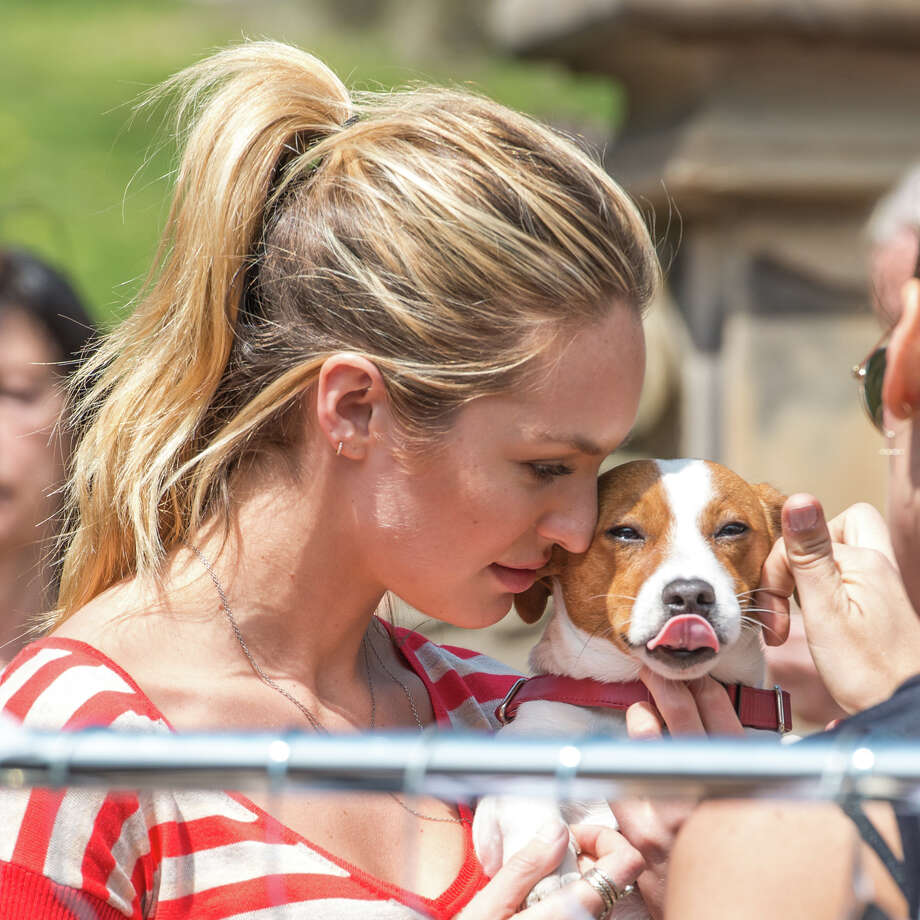 Model Candice Swanepoel and Milo. Photo: Michael Stewart, Getty Images / 2013 Michael Stewart
