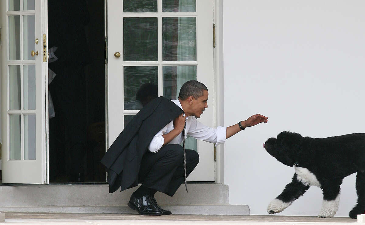U.S. President Barack Obama greets his dog Bo outside the Oval Office of the White House March 15, 2012 in Washington, DC.