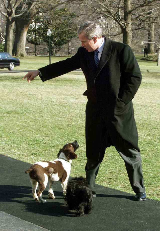 U.S. President George W. Bush with Spot and Barney. Photo: Mark Wilson, Getty Images / Hulton Archive